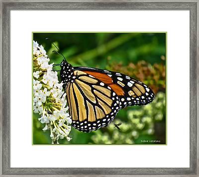 Summer Beauty Framed Print by Debra     Vatalaro