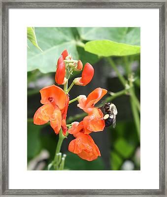 Summer Bee  Framed Print by Allison Walker
