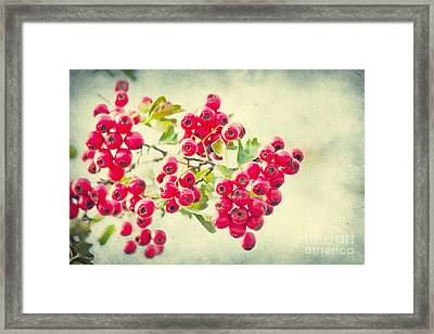 Summer Berries Framed Print by Angela Doelling AD DESIGN Photo and PhotoArt