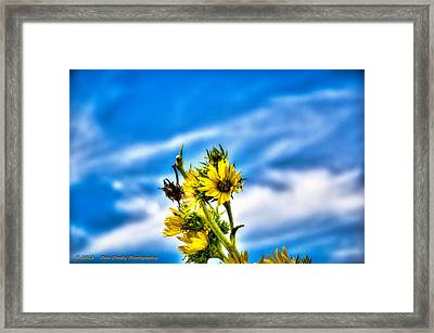 Summer Blooms Framed Print by Dan Crosby