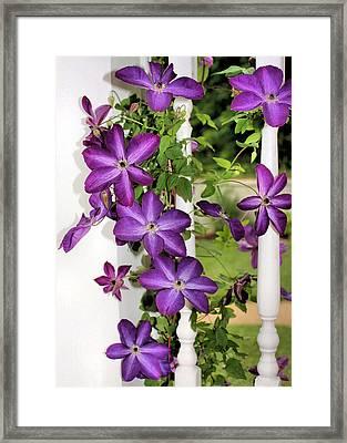 Summer Blooms Framed Print by Kristin Elmquist