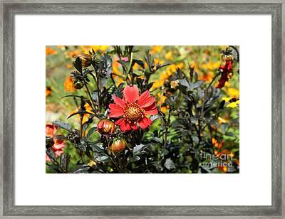 Summer Blossom Framed Print by Theresa Willingham