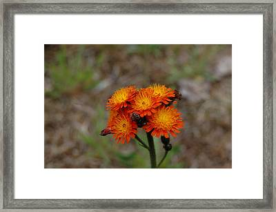 Summer Bouquet Framed Print