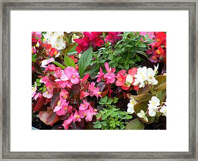 Framed Print featuring the digital art Summer Bouquet by Vicky Tarcau