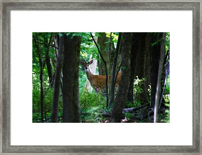 Summer Buck 1 Framed Print by Scott Hovind