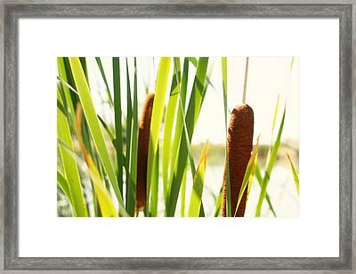 Summer Cattails Framed Print by JL Creative  Captures