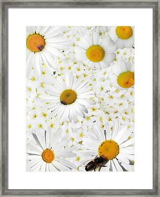 Framed Print featuring the photograph Summer Collage With Camomiles And Insects by Aleksandr Volkov