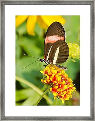 Summer Color 2 Framed Print