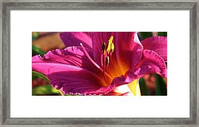 Summer Color Framed Print by Bruce Bley