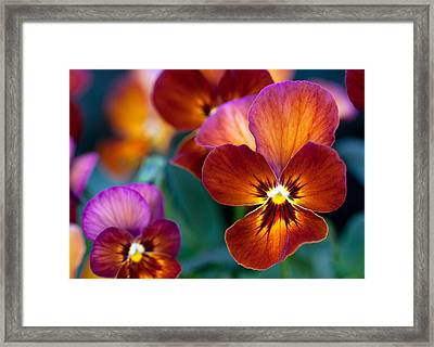 Framed Print featuring the photograph Summer Colors by Anna Rumiantseva