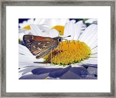 Framed Print featuring the photograph Summer Day by Irina Hays