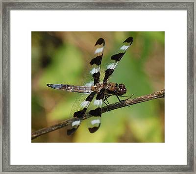 Summer Dragonfly Framed Print