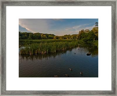 Summer Duck Pond Framed Print by Jiayin Ma