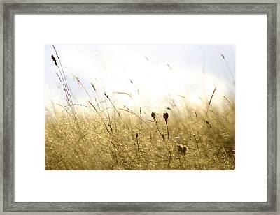 Summer Field Framed Print by Emanuel Tanjala