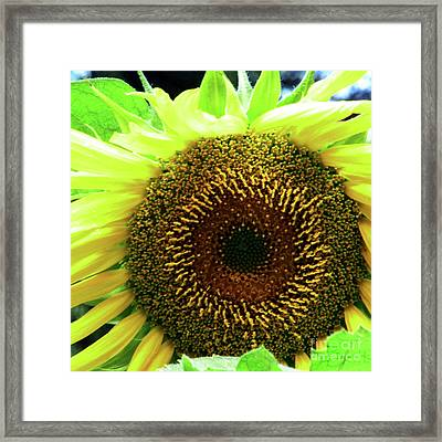 Summer Fresh Framed Print by Christine Belt