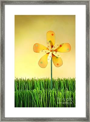 Summer Fun In The Grass Framed Print by Sandra Cunningham