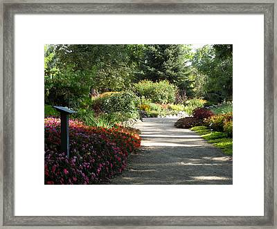 Summer Garden Path Framed Print by Kimberly Mackowski