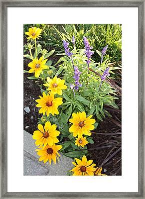 Framed Print featuring the photograph Summer Garden by Robin Regan