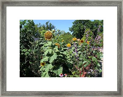 Summer Garden Framed Print by Theresa Willingham
