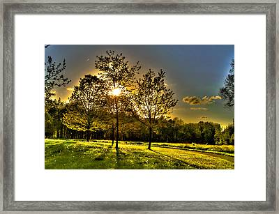 Summer Glow Framed Print