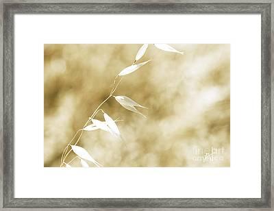 Summer Grass Framed Print by Artist and Photographer Laura Wrede