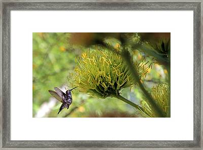 Framed Print featuring the photograph Summer Hummer by Jo Sheehan