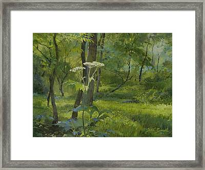 Summer In Fullersburg Woods Framed Print