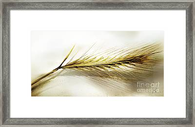 Summer In Ocher Framed Print by Artist and Photographer Laura Wrede