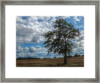 Summer In The Country Framed Print by Shon Saylor