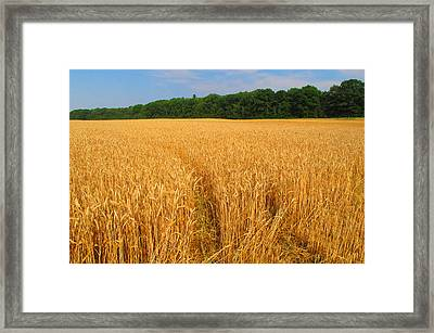 Summer In The Countryside  Framed Print by Lyle Crump