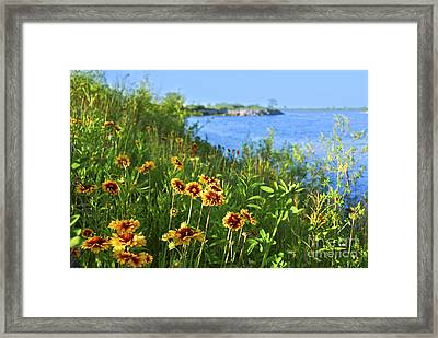Summer In Toronto Park Framed Print by Elena Elisseeva