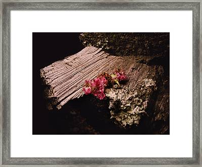 Summer Kisses Framed Print by Jessica Brawley