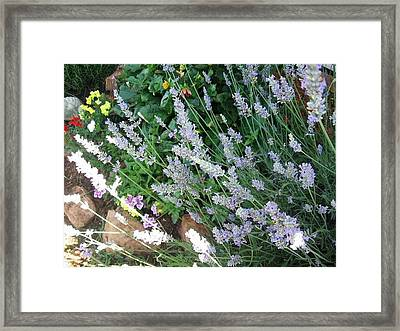 Framed Print featuring the photograph Summer Lavender by Deb Martin-Webster