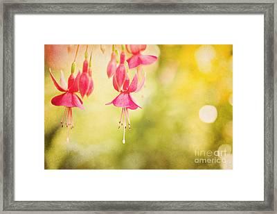 Summer Lov'n Framed Print