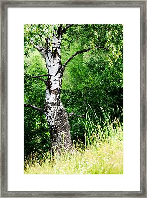 Summer Memory Framed Print by Jenny Rainbow