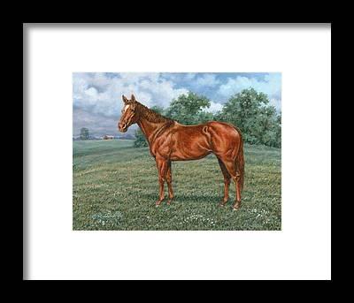 Sporthorse Framed Prints