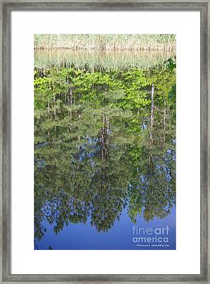 Framed Print featuring the photograph Summer Reflection by Tannis  Baldwin