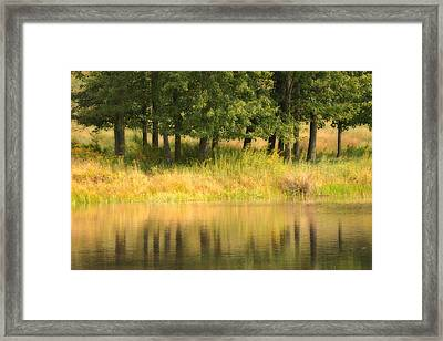 Summer Reflections Framed Print by Karol Livote