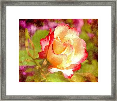 Summer Rose With Texture Framed Print by Cathie Tyler