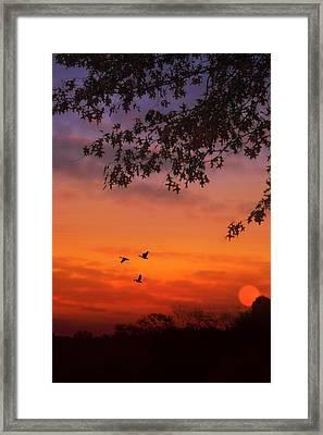 Summer Side Of Life Framed Print by Tom York Images