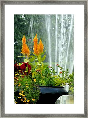 Framed Print featuring the photograph Summer Spray by Michelle Joseph-Long
