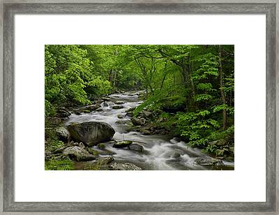 Summer Stream In Great Smoky Mountains  Framed Print by Darrell Young