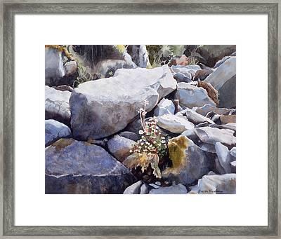 Summer Streambed Framed Print by Sharon Freeman