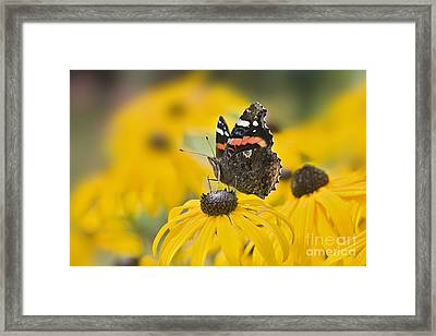 Summer Stunner Framed Print by Jacky Parker