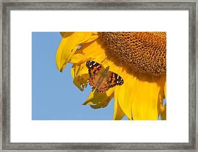 Summer Time Framed Print by Mircea Costina Photography