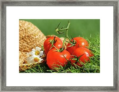 Summer Tomatoes Framed Print by Sandra Cunningham