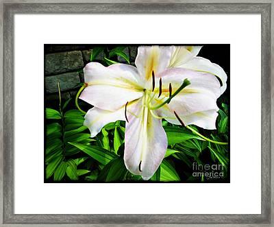 Summer White Madonna Lily Framed Print
