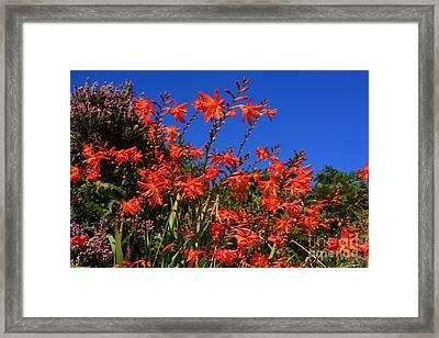 Summer Wildflowers Framed Print by Aidan Moran