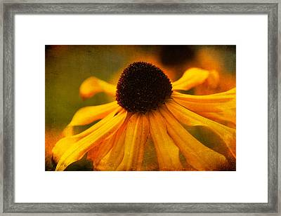 Summers Bloom Framed Print