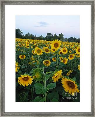 Summers Glory Framed Print by Gerald Strine
